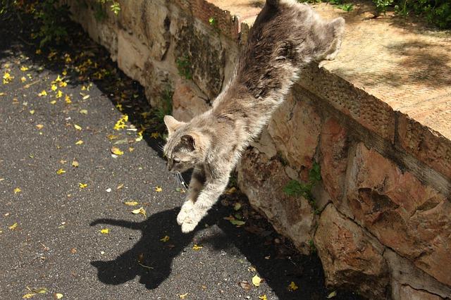 kot skaczacy