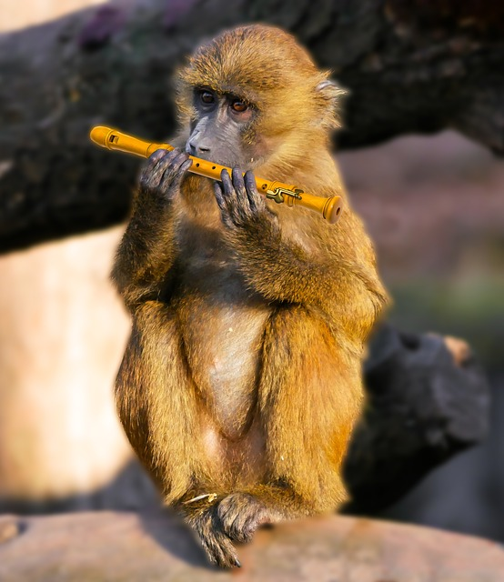 Czy małpę należy trzymać jako zwierzę domowe?