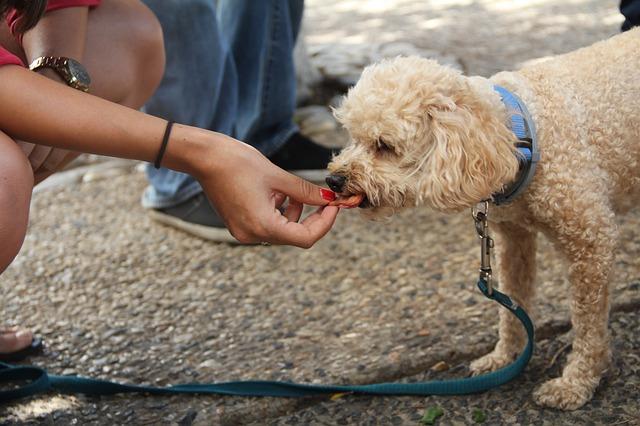pies jedzący przysmak